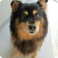 Adopt A Pet :: Roxie - Lafayette, NJ