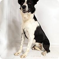 Adopt A Pet :: Grace BC - St. Louis, MO