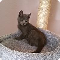Adopt A Pet :: Slate - Phoenix, AZ