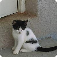 Adopt A Pet :: Sam - Lakeland, FL