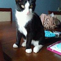 Adopt A Pet :: Deepak - Redding, CA