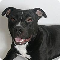 Adopt A Pet :: Samwise - Redding, CA