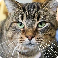 Adopt A Pet :: Dick Clark - Ann Arbor, MI