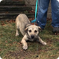 Adopt A Pet :: Hope is in Rhode Island!! - Plainfield, CT