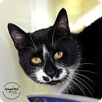 Adopt A Pet :: Michael - Lyons, NY