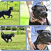 Adopt A Pet :: lucky - hollywood, FL