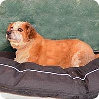 Adopt A Pet :: Bart - Bonsall, CA