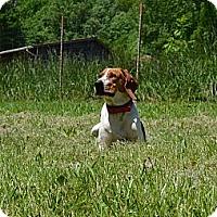 Adopt A Pet :: Mona - Bakersville, NC