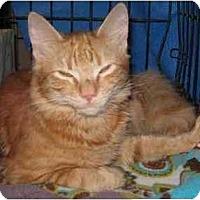 Adopt A Pet :: Ziggy - Westfield, MA