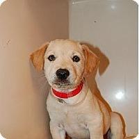 Adopt A Pet :: Nova - Coral Springs, FL