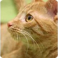 Adopt A Pet :: Martin - Chicago, IL
