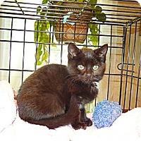 Adopt A Pet :: Posy - CARVER, MA