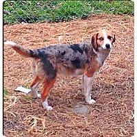 Adopt A Pet :: Madison - Hazard, KY