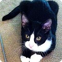 Adopt A Pet :: DaVinci - St. Louis, MO