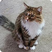 Adopt A Pet :: Arielle - Phoenix, AZ