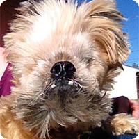 Adopt A Pet :: Chewbacca - Philadelphia, PA