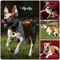 Adopt A Pet :: Birdie - Sioux Falls, SD