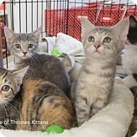 Adopt A Pet :: Khaleesi - Merrifield, VA