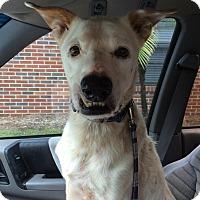 Adopt A Pet :: Nemo - Avon Park, FL