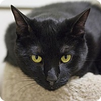 Adopt A Pet :: Breaker - Brick, NJ