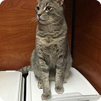 Adopt A Pet :: Adam - Phillipsburg, NJ