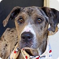Adopt A Pet :: Gypsy - Baton Rouge, LA