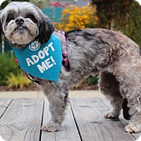 Adopt A Pet :: Bubbles Peek - Pacific Grove, CA