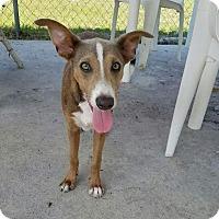 Adopt A Pet :: Lorenzo - Umatilla, FL