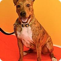 Adopt A Pet :: King - Albuquerque, NM