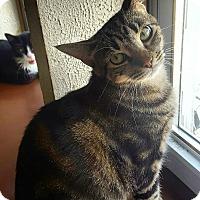 Adopt A Pet :: Gretel - Bronx, NY