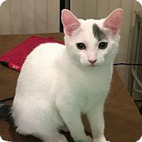 Adopt A Pet :: Elsa - Chandler, AZ