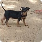 Adopt A Pet :: Columbo