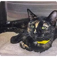 Adopt A Pet :: Blossom - Webster, MA