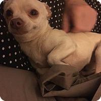 Adopt A Pet :: Coco - Windermere, FL