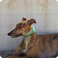 Adopt A Pet :: Rosie - Aurora, OH