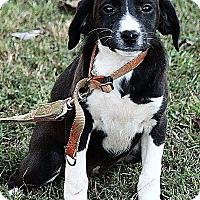 Adopt A Pet :: Libby - Allentown, PA