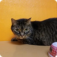 Adopt A Pet :: Chace - Elyria, OH