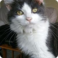 Adopt A Pet :: Jilve - Grand Ledge, MI