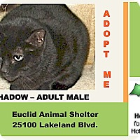 Adopt A Pet :: Shadow - Euclid, OH