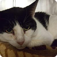 Adopt A Pet :: Theo - Salisbury, MA