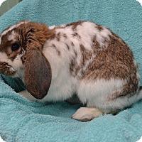 Adopt A Pet :: Buddy - Wheaton, IL
