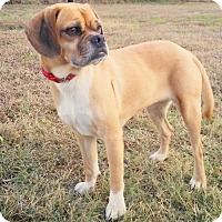 Adopt A Pet :: Cocoa - Pipe Creed, TX