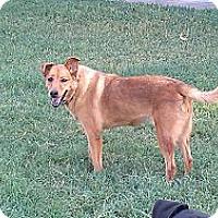 Adopt A Pet :: Rascal - Eddy, TX