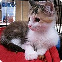 Adopt A Pet :: Marcie - Irvine, CA