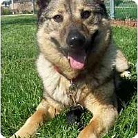 Adopt A Pet :: Tanner - Belleville, MI