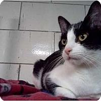 Adopt A Pet :: Midge - Centerburg, OH