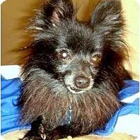 Adopt A Pet :: Peyton - Houston, TX