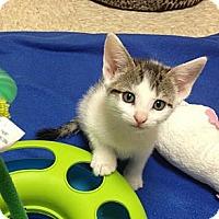 Adopt A Pet :: Carolina - Island Park, NY