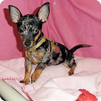 Adopt A Pet :: Marge - Mooy, AL
