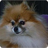 Adopt A Pet :: TIca-Adopted - Nine Mile Falls, WA